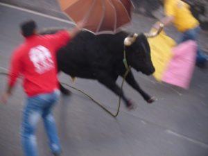 Der Stier ist gut drauf...