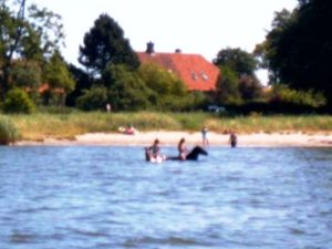 Zwei Seepferdchen im Wasser